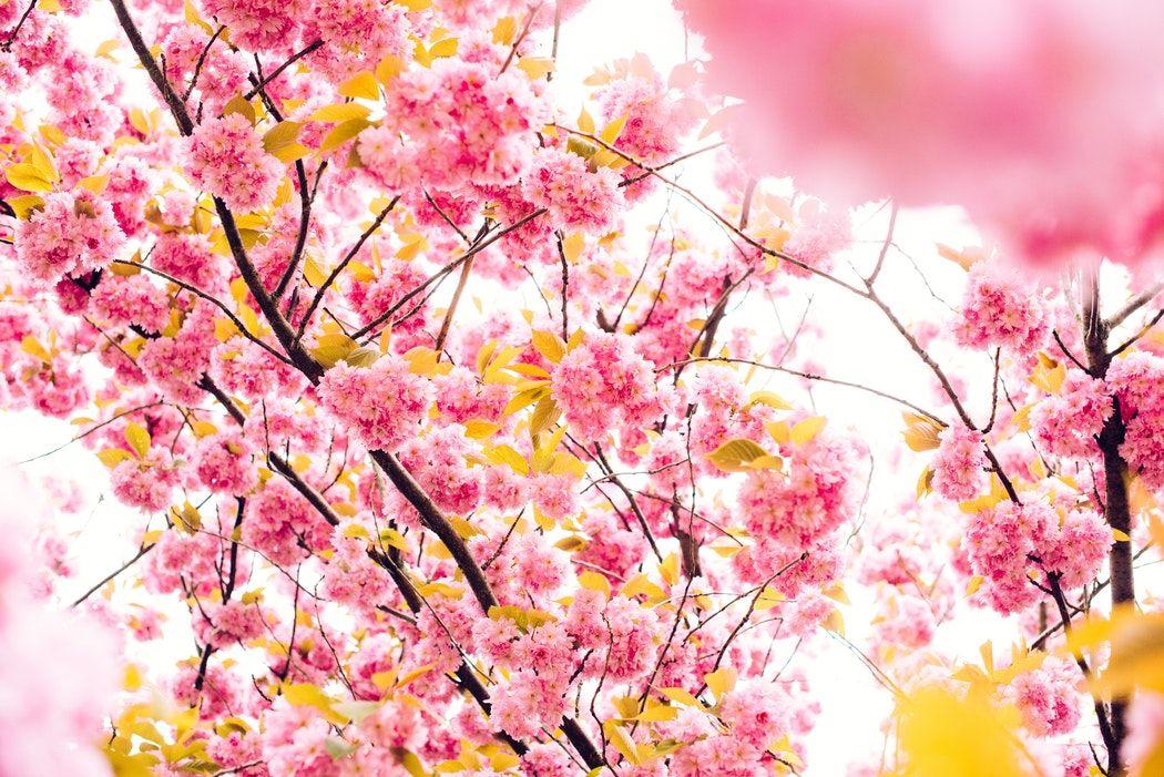 Cum să aduci primăvara la evenimentul tău?